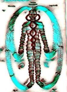 dibujo representativo de la anatomía inalámbrica de la Terapia de Polaridad, que concibe el cuerpo humano como polo positivo, negativo y neutro
